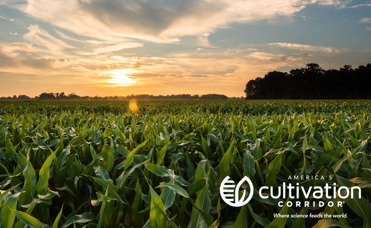 Play Manifest Video - Image of sunrise over Iowa corn field